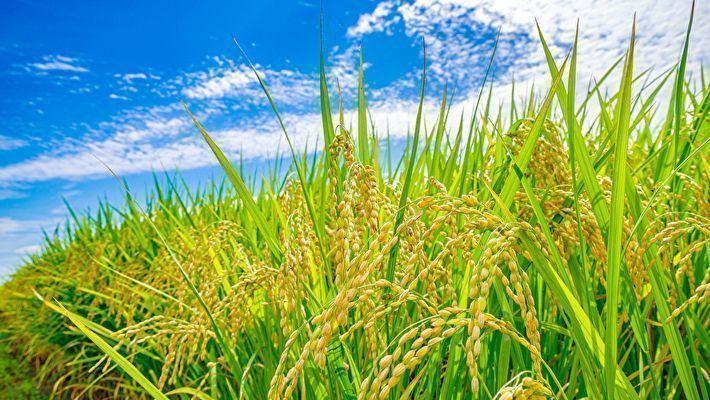 農業の青色申告でソフトは必須?おすすめの会計ソフトを紹介!